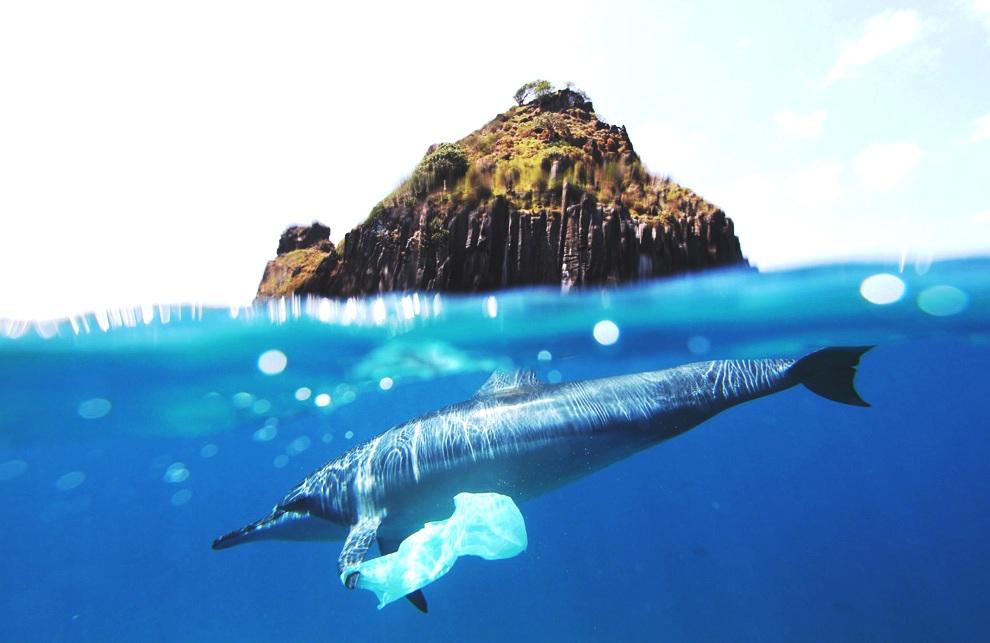 2021 is het jaar dat de EU single use plastic in de ban doet om de oceaan te redden